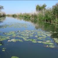 Mini-delta din sudul Bihorului