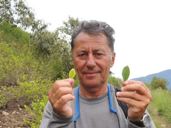 Plantatie de coca (legala) in Coroico,Peru