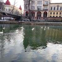 BĂLAN & RAȚ: Pâinea nu le priește! Plus AUDIO