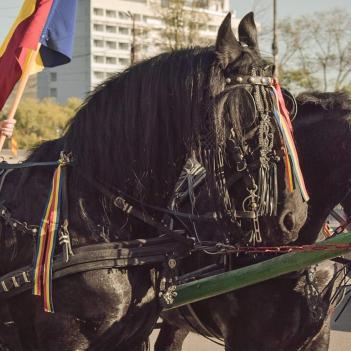 Sursă foto: arhiva personală Vanesa Nicoară