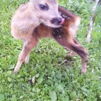 SARA: Povestea lui Bambi
